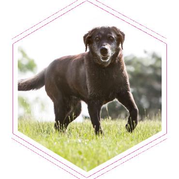Szaladgáló kutya a mezőn
