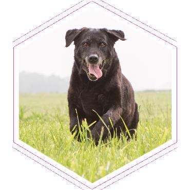 Câine în iarbă