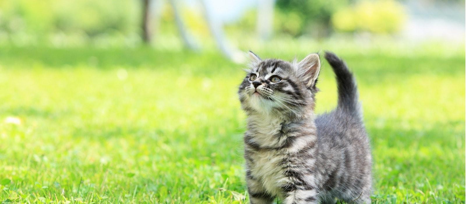 High Fibre Cat Food Uk