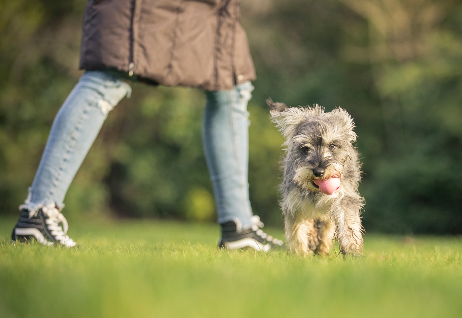 Best Puppy Training Classes Near Me In Ireland
