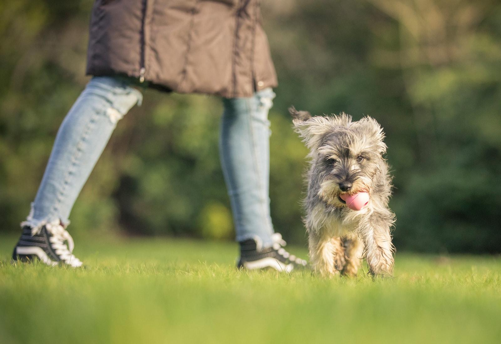 Cours de dressage pour chiens | Eukanuba