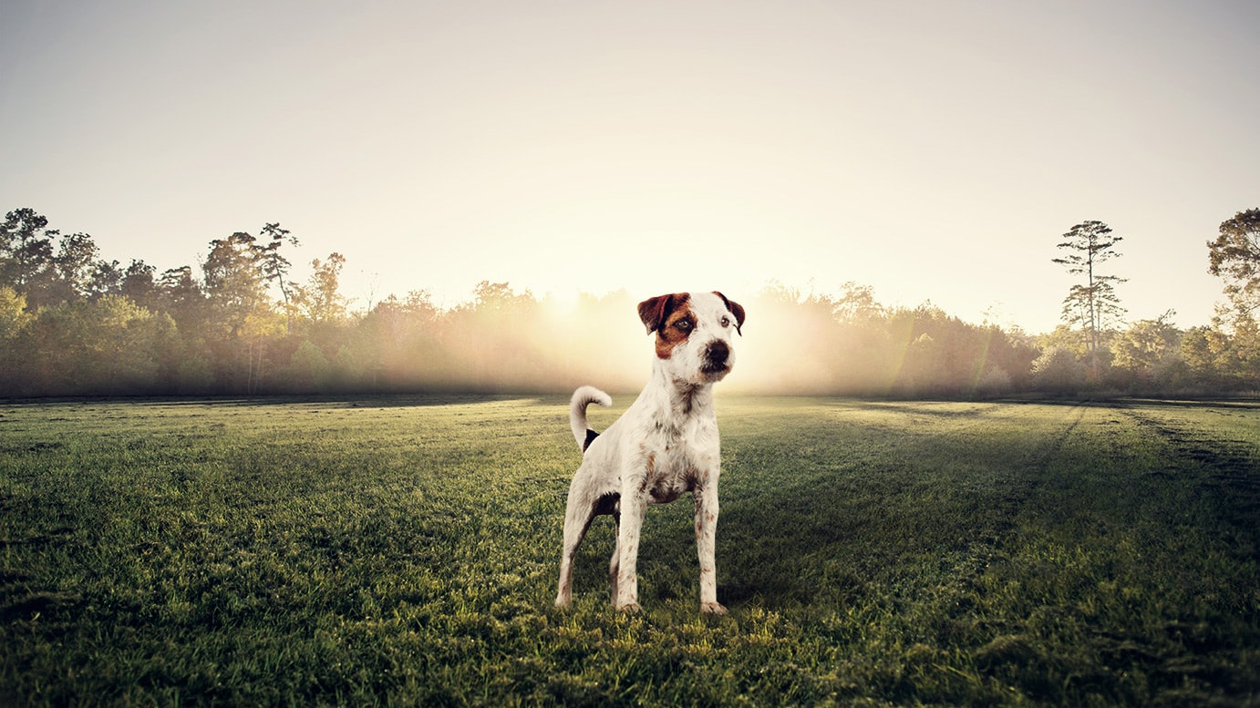 Dry Dog Food For Jack Russell Terriers