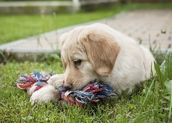PUPPIES AND CHEWING