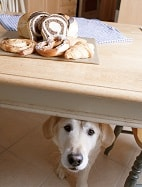 HUMAN FOOD CAN BE HARMFUL TO YOUR PUPPY